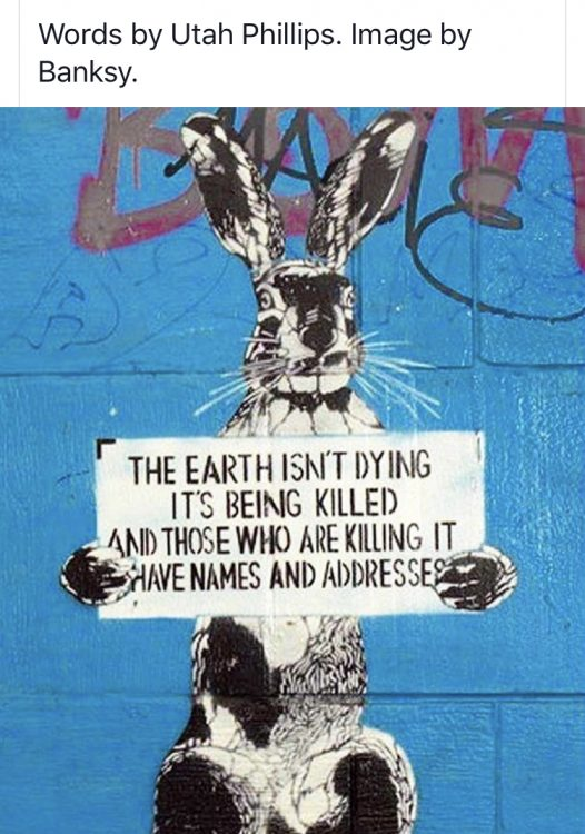 The earth isn't dying its being killed and those who are killing it have names and addresses.